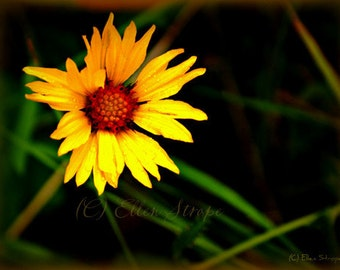 PHOTO card, daisy, flowers, wildflowers, yellow, flower decor, home decor, daisies, Ellen Strope, note cards, greeting cards