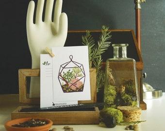 Terrarium Glass Case 1pc