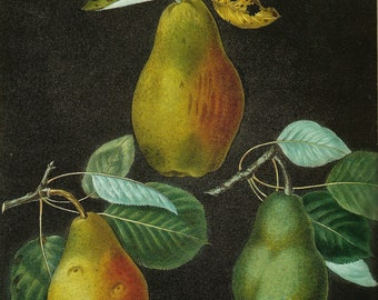 PEAR PRINT Color Art Print Original 2002 Book Plate 169 Beautiful Pears Antique Writing Garden Tree Nature Home Decor