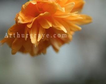 L'Orange (8x12)