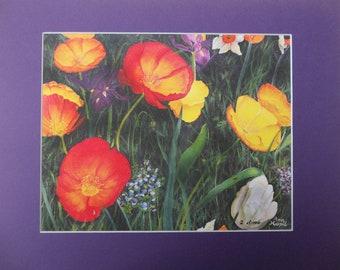 Sunburst Poppies