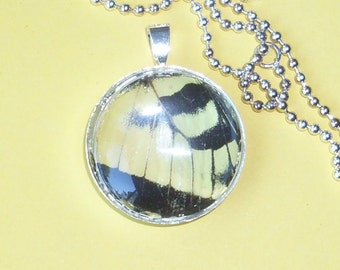 Real Butterfly Wing Pendant  BF13