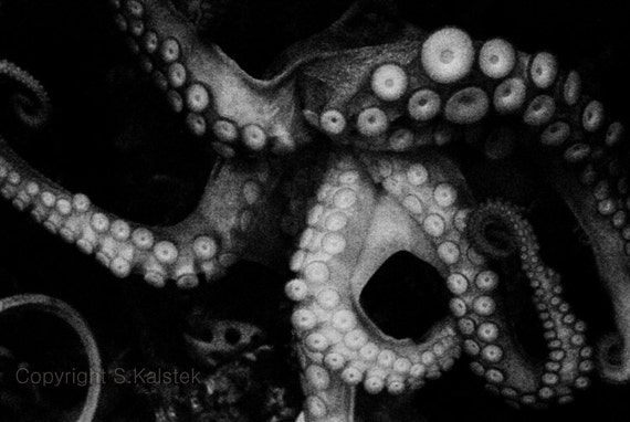 Octopus Photograph Sea Creature Tentacles Ocean Life Photography black and white sea wall art 8x12