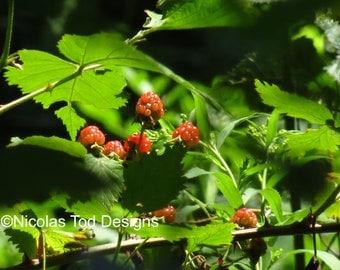 Wild Berries 8x10 photo