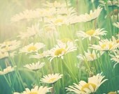 Daisy Photography, Field of Daisies Picture, Pretty Flower Photography, Floral Nursery Decor, Yellow Green White Wall Art 8x10, 11x14 Print