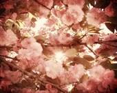 Cherry Blossom Photography, Pink Nursery Wall Art, Cherry Blossoms, Pink Tree Art, Shabby Chic Pink Flowers, Baby Girl Nursery 8x10 Print