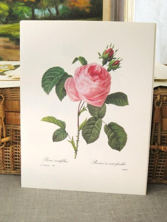 40% off Entire Shop - Vintage Botanical Print 10 x 13  No 118- Paper Ephemera