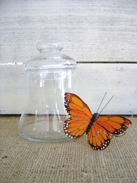Vintage Small Apothecary Bell Jar