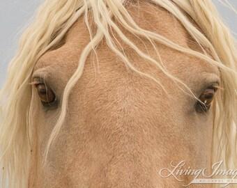 Corona's Eyes - Fine Art Wild Horse Photograph - Sand Wash Basin - Corona - Fine Art Print