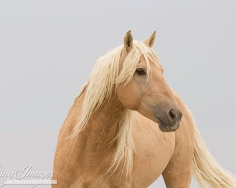 Corona - Fine Art Wild Horse Photograph