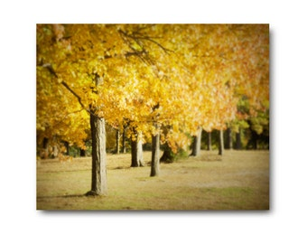 Autumn Landscape Photography, tree print, autumn print, yellow leaves, trees, fall, foliage, wall decor, home decor, gold, golden