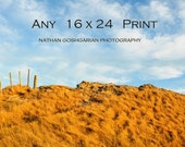 Any 16 x 24 Fine Print.