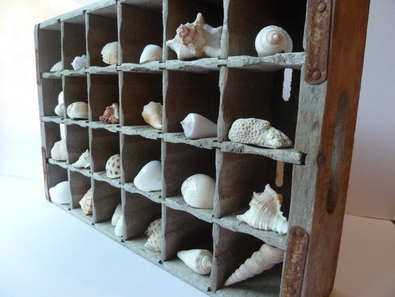 Shell collection rustic home decor beach decor natural for Shells decorations home