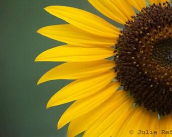 Sunflower photo fine art flower print