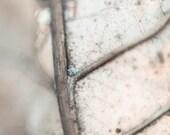 "Leaf photography Neutral grey beige Nature photo Winter woodland 8x8"" (20x20cm)"