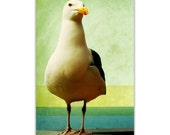 photography, nautical photography, beach, vintage beach, seagull,summer, beach art, beach house, retro - Gull, 8x12 fine art photograph