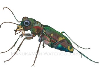 Print of Tiger Beetle watercolor by Damon Crook (fits standard 11 x 14 matted frame)