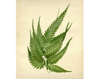Vintage Botanical Floral Leaf/Greens Series Plate 7 Digital Download: 8x10, specimens, vntage-look, printing and framing, decoupage