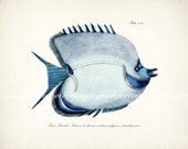 Fish of the Coral Reefs Illustration - Natural History Giclee Art Print 10 x 8 Blue