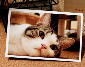 Postcard Set - I Want to Have A Cat - 30 Sheets