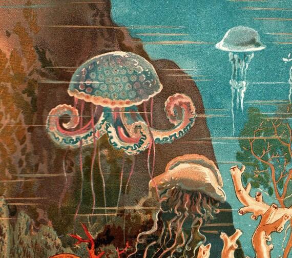 1883 Marine Fauna Antique Chromolithograph Natural History