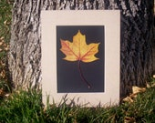 8x10 Single Pressed Leaf - Maple Leaf - Organic Botanical Natural Art