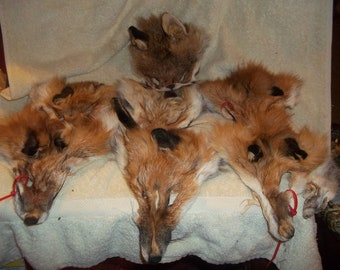 7 real animal fur Tanned red fox face head mask taxidermy hide skin pelt parts