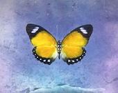 DIGITAL DOWNLOAD-Butterfly Print. pastel purple Fine Art Photograph, Butterfly, Photograph, Girly, Nursery Art, Kids Bedroom, Spring
