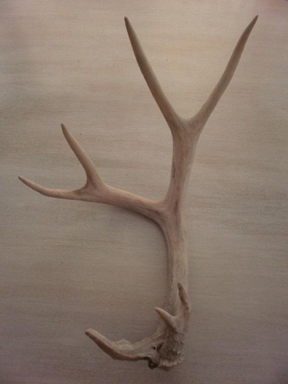 Unique eyecatching real deer antler-antlers-horns-crafts-decor-design-rustic-art