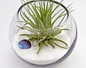 ZODIAC VIRGO terrarium -trendy home decor, sand art, terrarium, air plant, tillandsias, horoscope, birthday gift, virgo gifts, party favors