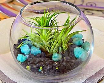 SOIREÉS GANESH mini terrarium wedding gift, terrarium, live plant,  home decor, birthday, housewarming,office gift,hostess gift,
