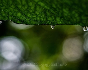 3 drops of rain on leaf, fine art photography, 8x12 still life photo print StrongylosPhoto, Asheville, North Carolina