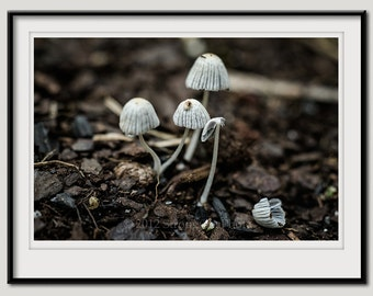 mushrooms, earthy forest photo, kitchen decor, 8x12 mushroom photography, fungi, brown and white, wild mushrooms, woodland
