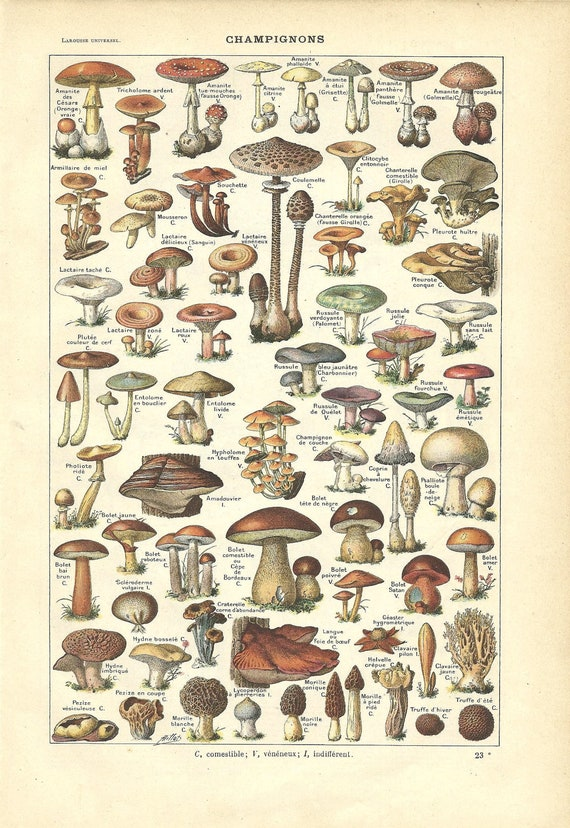 1922 - Poster - MUSHROOMS - French Dictionary Color Illustration