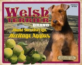 Welsh Terrier Small Wooden Crate