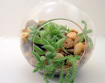 Terrarium ONLY, DIY, Hanging Glass, Hostess gift, No PLANTS