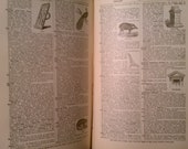 Websters Condensed Dictionary - 1884