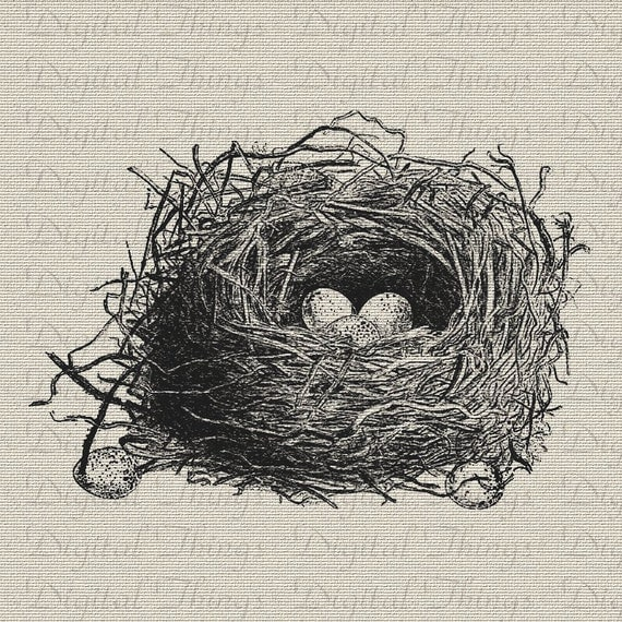 Digital Download for Iron on Transfer Bird Birds Nest Eggs Wildlife Illustration Evergreen Tea Towel Fabric Pillows  DT391