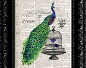 Peacock - On A Birdcage - Vintage Dictionary Print Vintage Book Print Page Art Upcycled Vintage Book Art