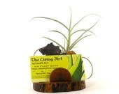 Business Cardholder Grapewood with Air Plant Desk Accessory Executive Bosses Coworker Gift