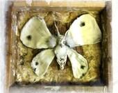 Moth Mother