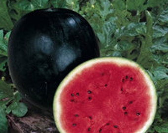 Watermelon - Sugar Baby - Heirloom - The Sweetest - 20 Seeds