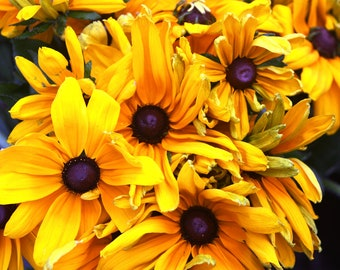 Yellow Rebekiah Photograph