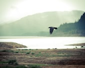 Crow, Raven, Blackbird, Pacific Northwest, Fog,  8 x 10 Photography Art Print