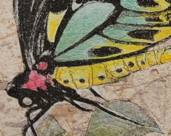 BIRDWING, butterfly, original zinc plate etching
