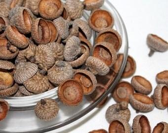 Acorn Caps For Crafts 150+ Red Oak