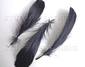 Black feathers GOOSE NAGOIRE, loose black feathers for millinery, crafts, wedding, real feathers, 4-7 in (10-17.8 cm), 12 pcs / F95-4/12