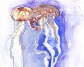 Original watercolor jellyfish study by Ioana Avram, wildlife illustration, two colorful jellyfish