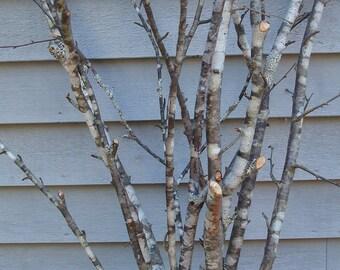 Tree branches White Lichen NATURAL SPECIMEN untreated and FRESH