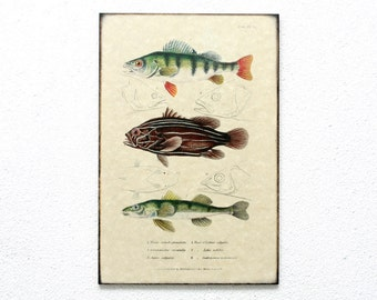 "Wooden Retro Wood Wall Art 8x12"" 20x30 cm, Fish Educational Board, Wall Hanger, Art Deco Room Decor, Natural History, Nursery room art"